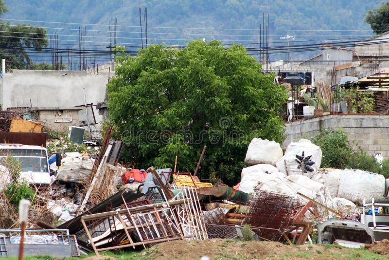 Дерево растя в junkyard стоковая фотография rf