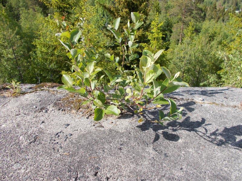 Дерево растя от бетона стоковые изображения rf