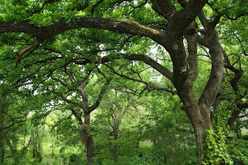 Дерево, расчистка, лес, природа стоковое фото rf