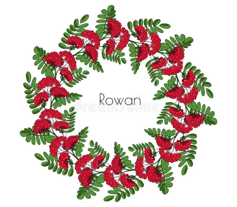 Дерево рябины венка красное Хворостина орнамента rowanberry или ashberry декоративный circlet элемента выходит и группа ягоды ряб стоковые фото