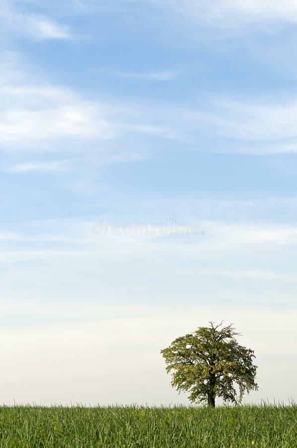 Дерево самостоятельно с большой вертикалью неба стоковое изображение