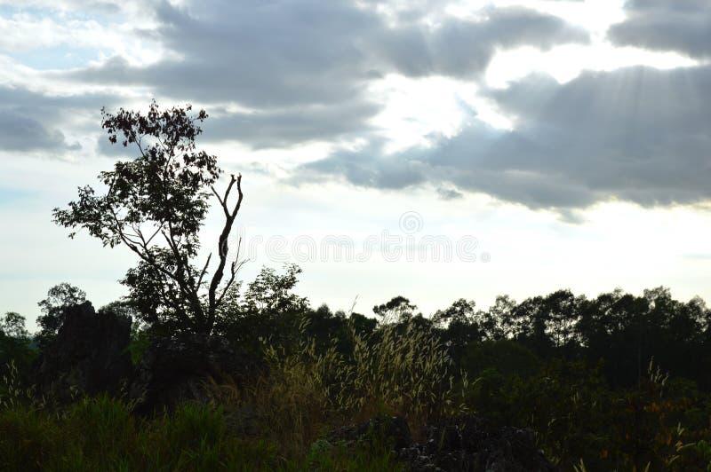 Дерево силуэта и цветок травы дуя от ветра на горе Khao Lon в Таиланде стоковые изображения rf