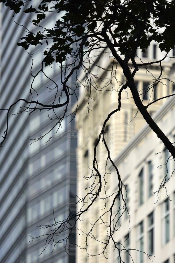 Дерево силуэта на окне в Сан-Франциско стоковые фотографии rf