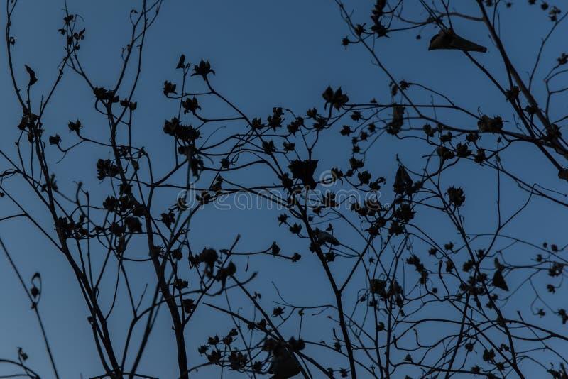 Дерево силуэта сухое на предпосылке голубого неба стоковая фотография rf