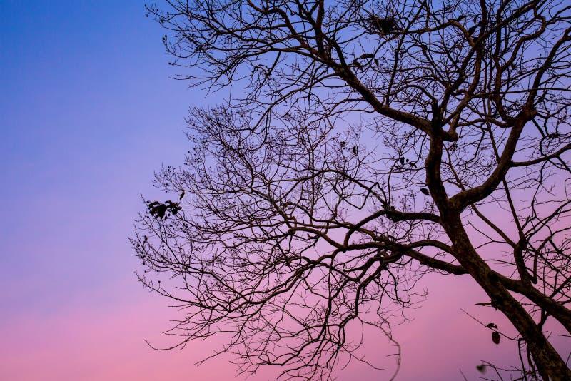 Download Дерево силуэта стоковое изображение. изображение насчитывающей sunrise - 37925387