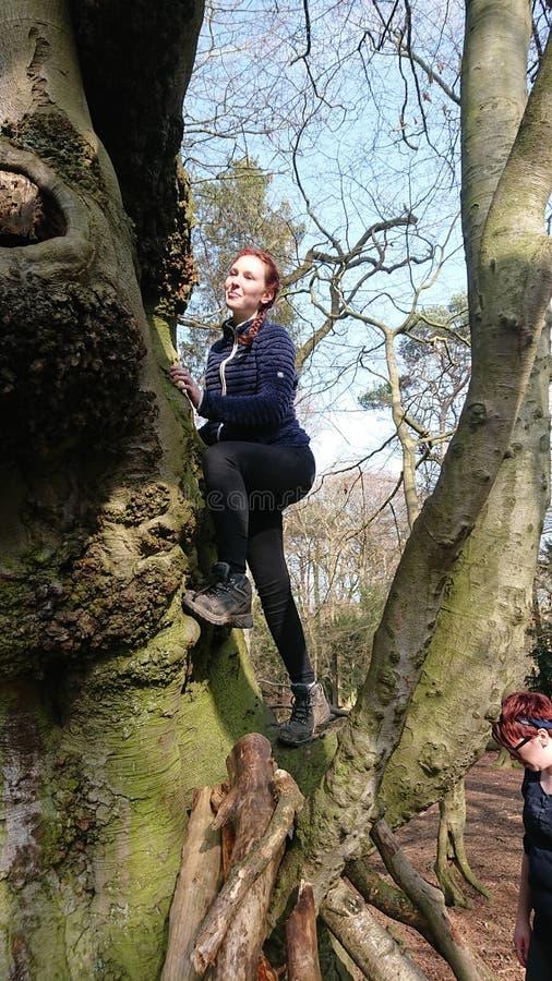 Дерево скалолазания стоковое изображение rf