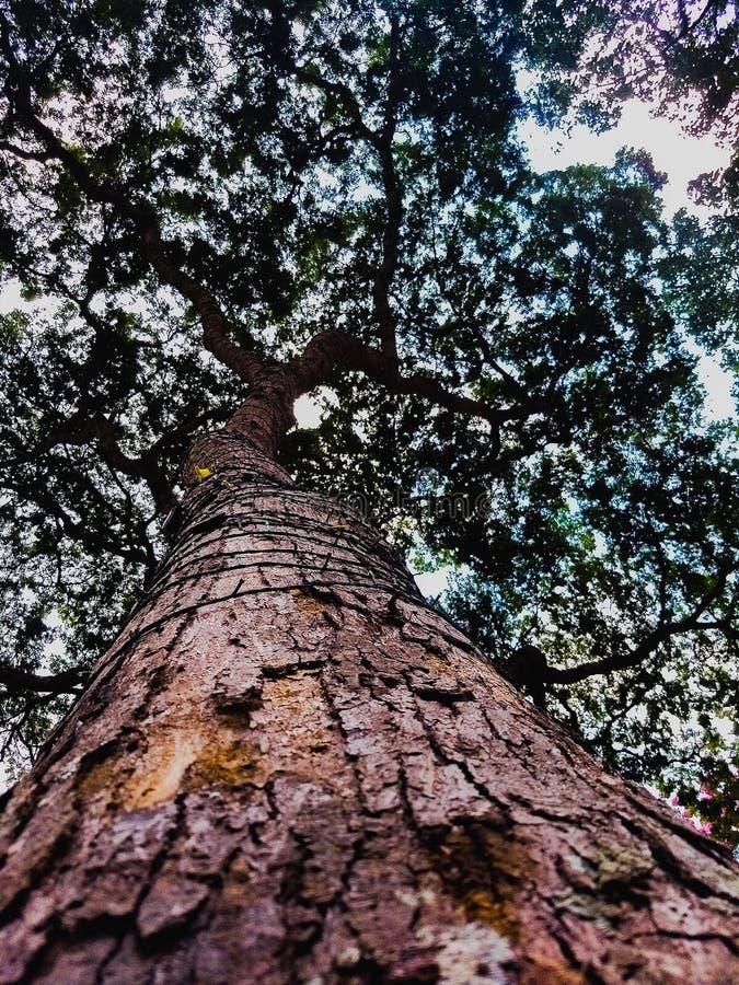 Дерево снизу вверх стоковое изображение rf