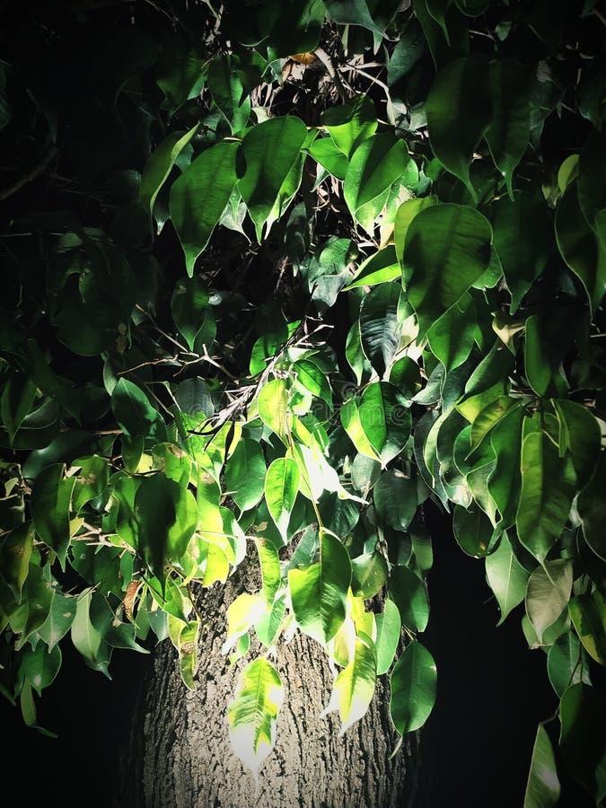 Дерево со светом стоковая фотография