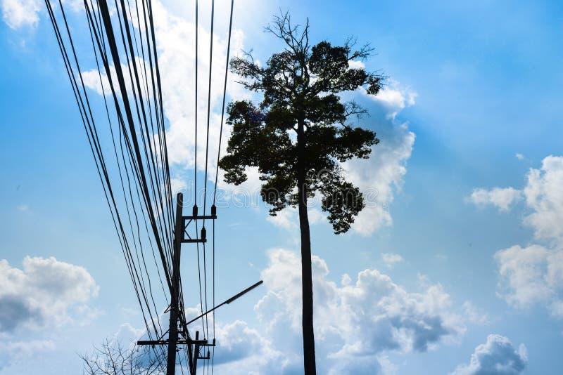 Дерево стойки одно большое с кабелем стоковое фото