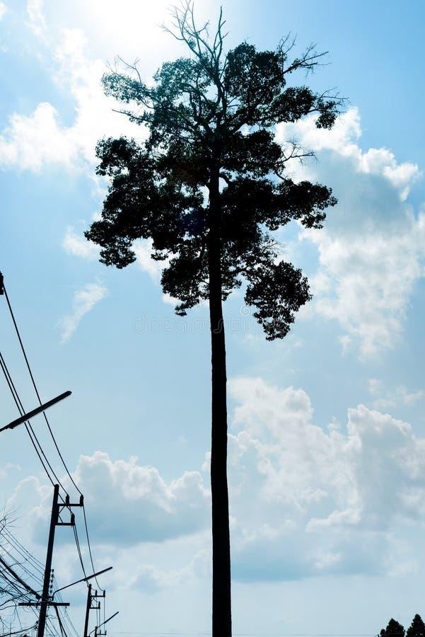 Дерево стойки одно большое с кабелем стоковая фотография rf