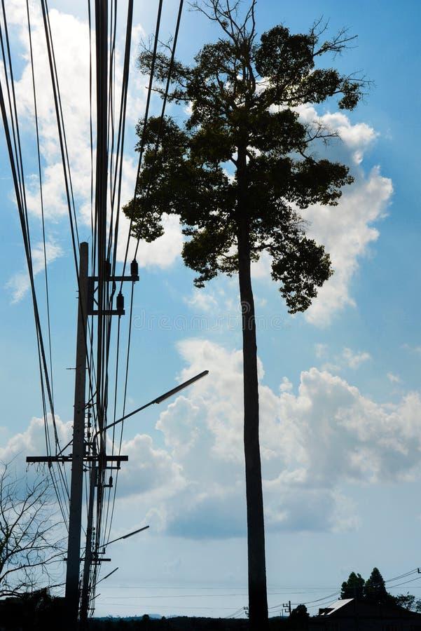 Дерево стойки одно большое с кабелем стоковые изображения