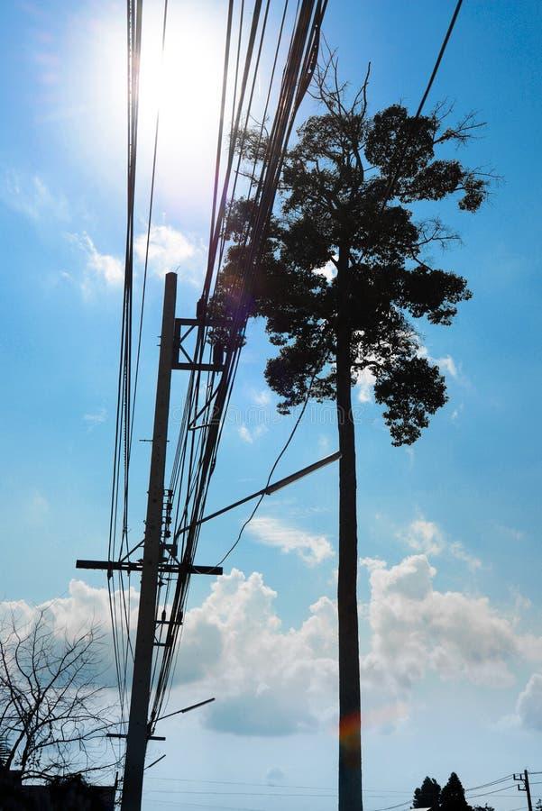 Дерево стойки одно большое с кабелем стоковые фотографии rf