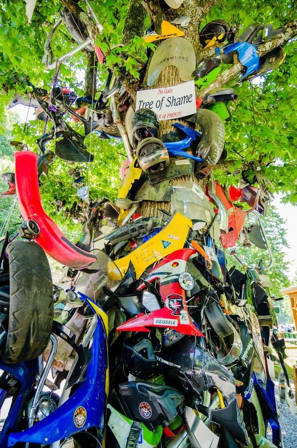 Дерево стыда около кабеля дороги дракона в nc стоковая фотография
