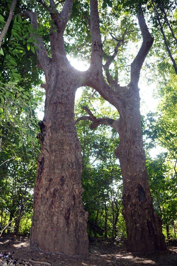 Дерево Супруг-жены! стоковое фото