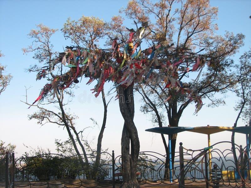 Дерево счастья стоковое фото rf