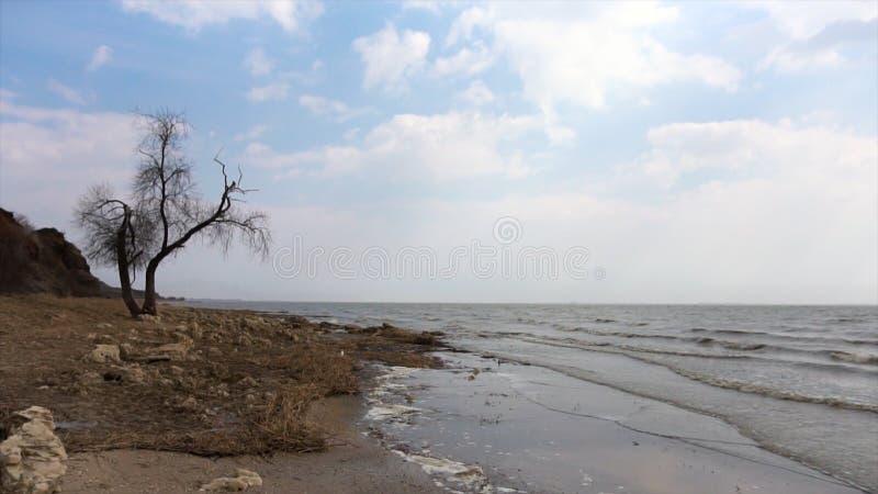 Дерево с ветвями на seashore, волнах и предпосылке неба видео Мертвые деревья создают двор boneyard или могилы для деревьев стоковое фото rf