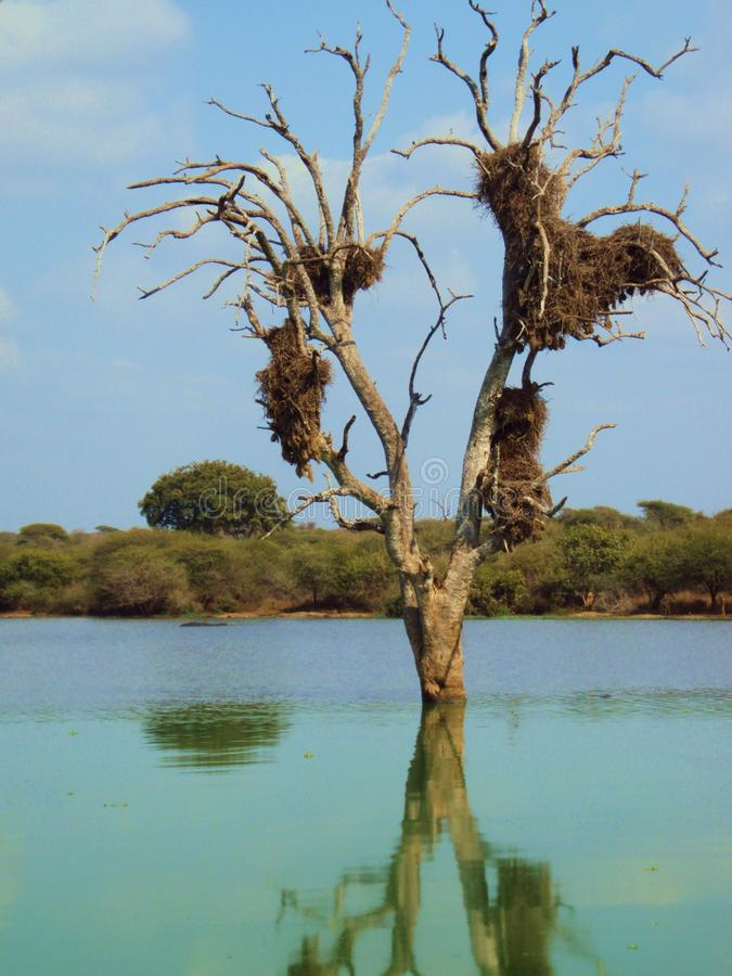 Дерево с гнездом стоковые фото