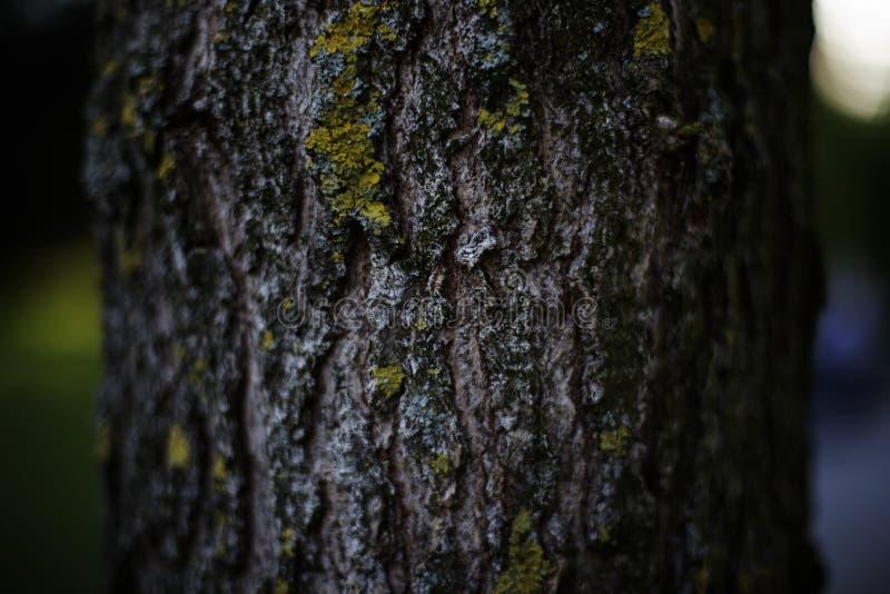 Дерево с зеленым Моссом Бесплатное  из Общественного Достояния Cc0 Изображение