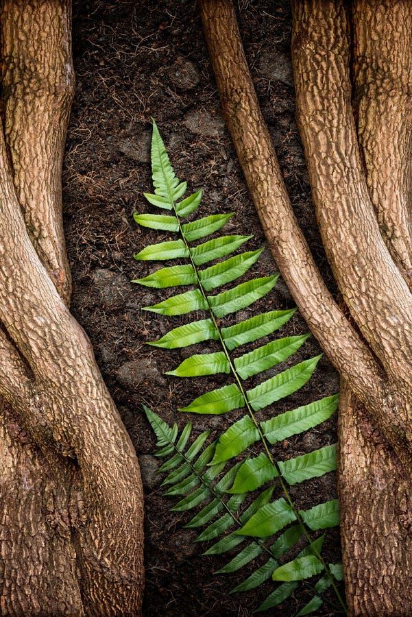 Дерево с зелеными папоротником и почвой стоковое изображение