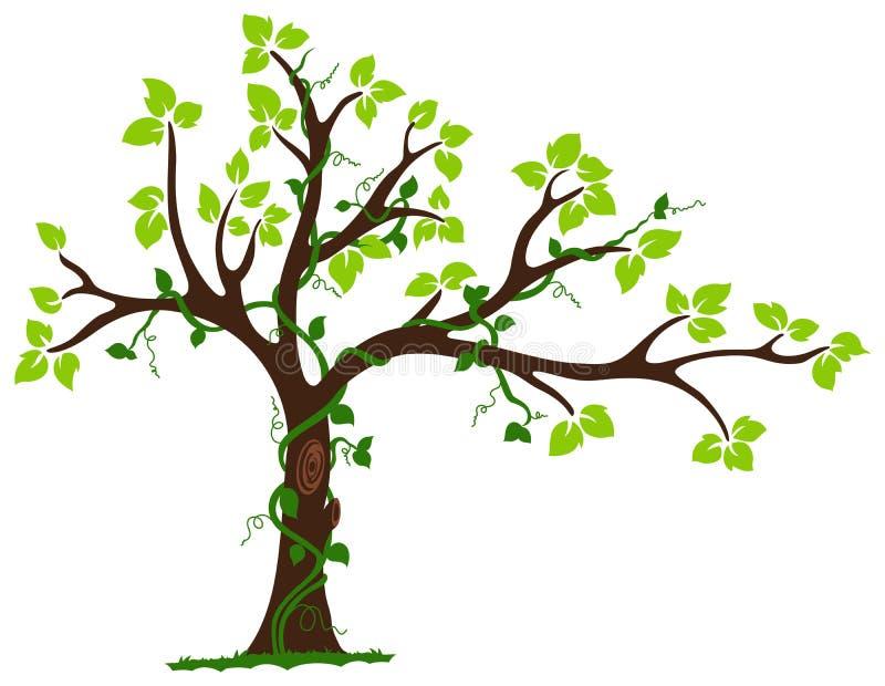 Дерево с лианой и лозой иллюстрация вектора