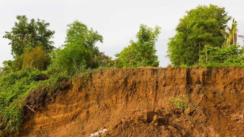 Дерево с скольжениями почвы стоковые фотографии rf