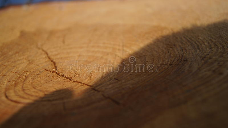 Дерево с тенью стоковое фото rf