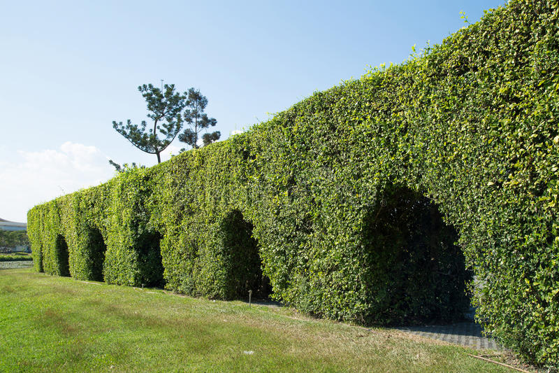 Дерево тоннеля в парке стоковые фото