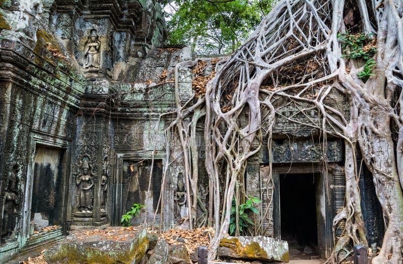 Дерево укореняет над красивым виском Prohm животиков на Angkor, Re Siem стоковая фотография rf