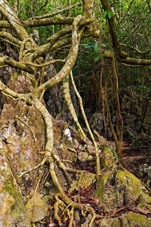 дерево укореняет сад зеленого леса ботанический стоковое фото rf