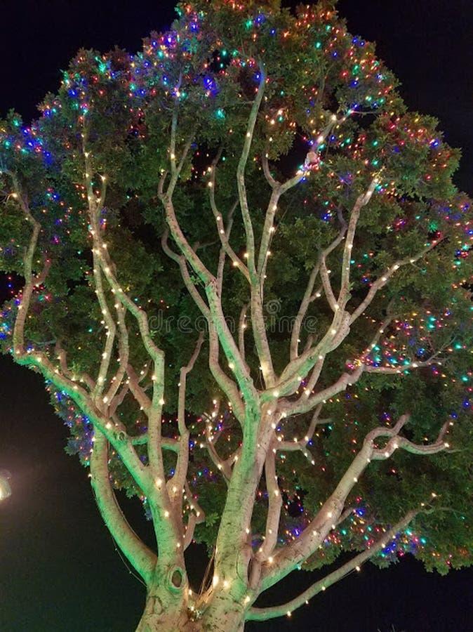 Дерево украшено с красиво накаляя светами в Диснейленде стоковое изображение rf
