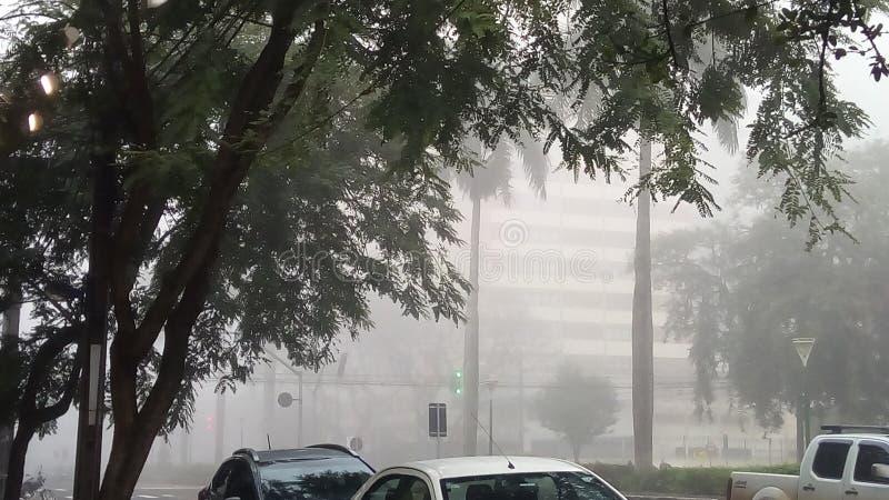 Дерево улицы климата погоды стоковая фотография rf