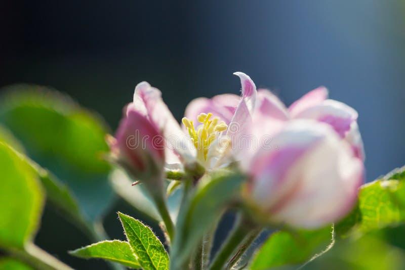 Дерево цветения стоковая фотография rf