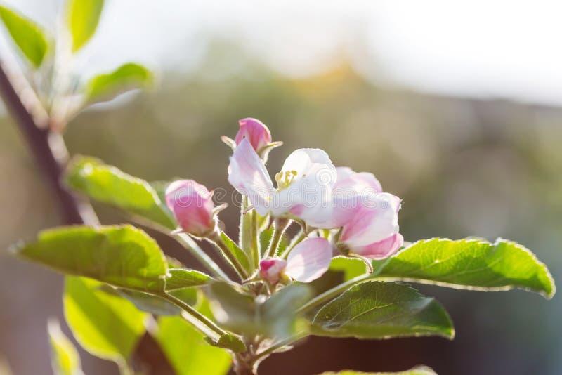 Дерево цветения стоковое фото