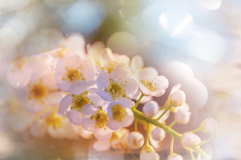 Дерево цветения стоковые фотографии rf