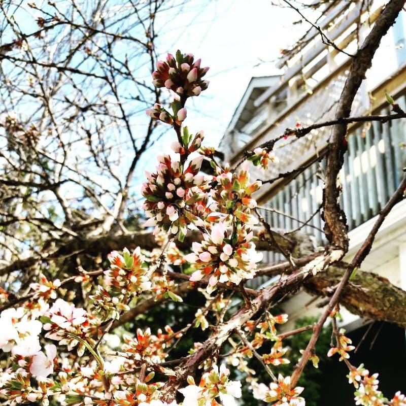 Дерево цветка стоковое фото rf