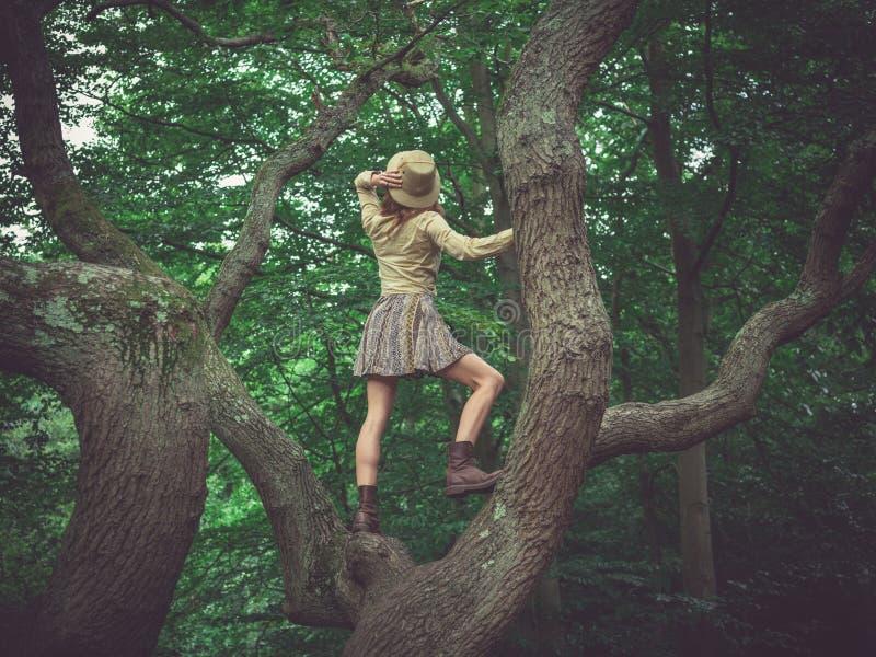 Дерево шляпы сафари женщины нося взбираясь стоковая фотография rf