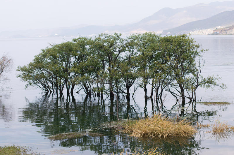 Дерево Юньнань, Китая Dali красивое Erhai в воде стоковые фото