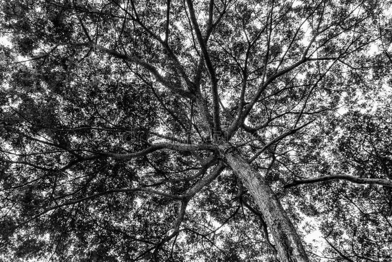 Дерево для предпосылки стоковые изображения rf