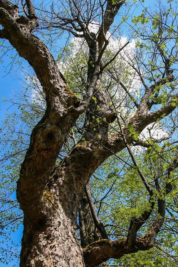 Download Дерево стоковое фото. изображение насчитывающей ландшафт - 37928036
