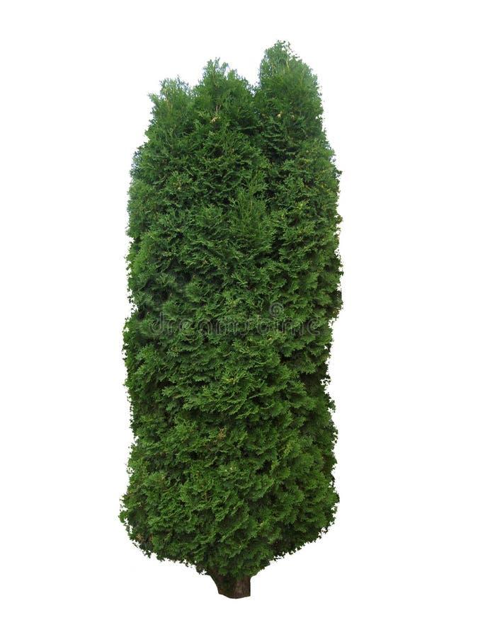 Дерево 1 стоковые изображения rf