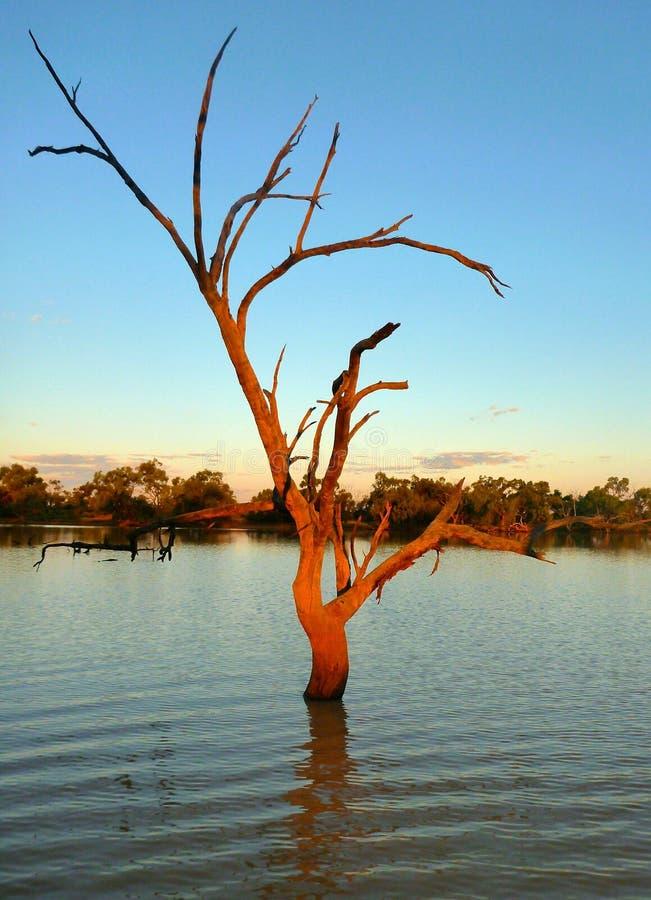 Дерево billabong захолустья на заходе солнца стоковое фото rf