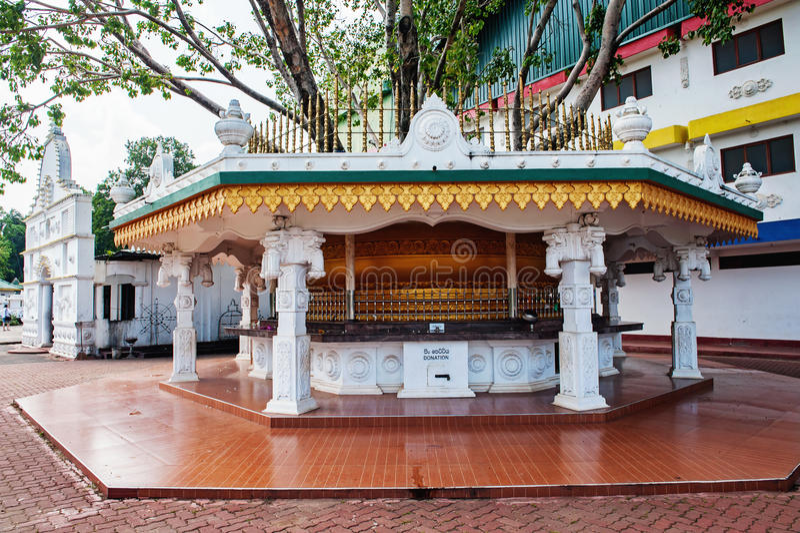 Дерево Bo в виске Dambulla Шри-Ланки золотом стоковые фотографии rf