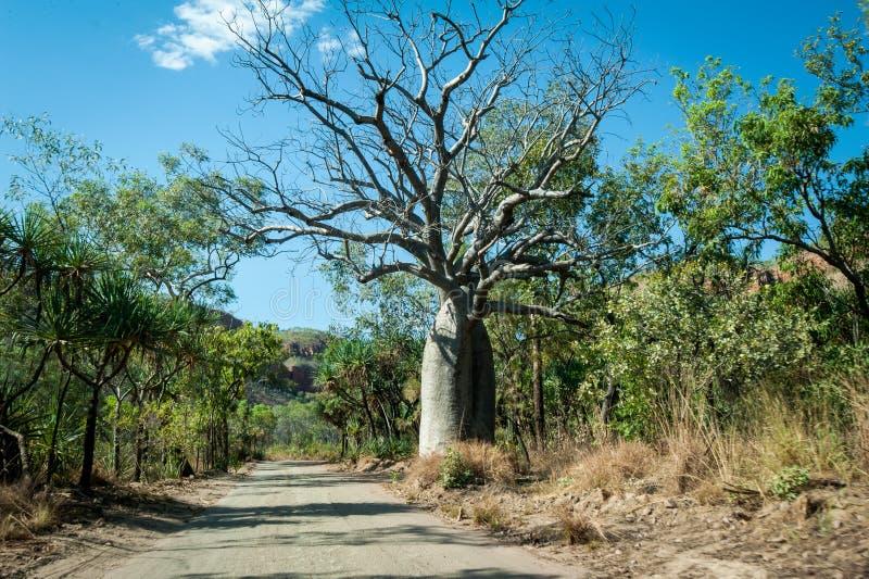 Дерево Boab вдоль дороги реки Gibb в захолустье Австралии стоковая фотография rf
