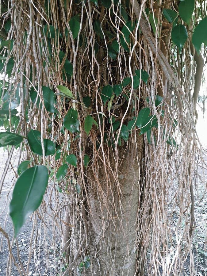 Дерево Bringin стоковые фотографии rf