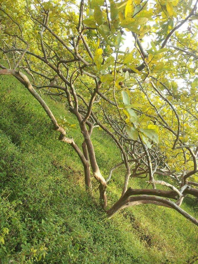 Дерево & Catty стоковое фото rf