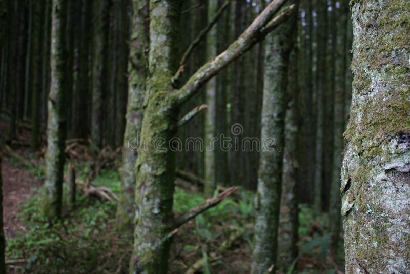 Дерево Dep стоковое фото