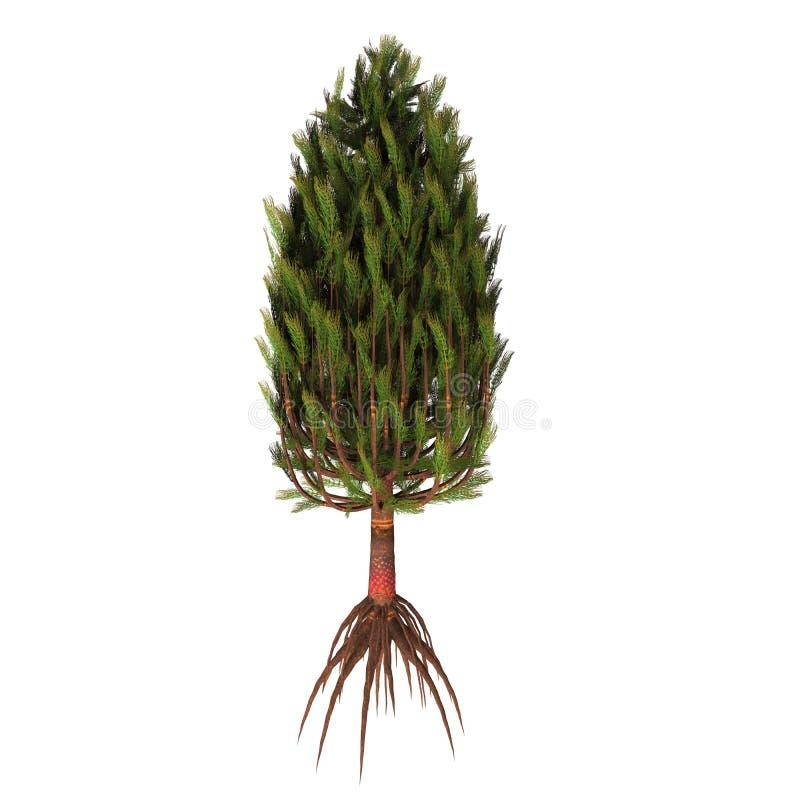 Дерево equisetiformis Asterophyllites бесплатная иллюстрация