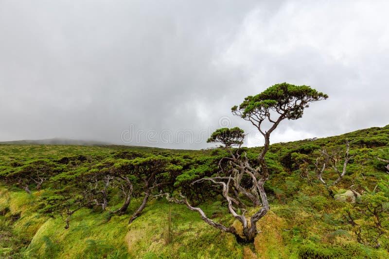 Дерево Flores стоковое изображение rf