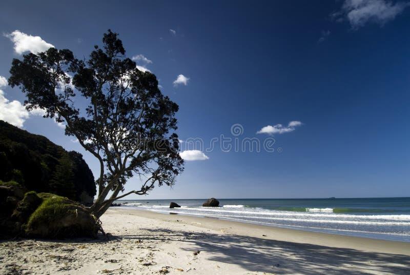 Download Дерево Pohutukawa на северном пляже острова, Новой Зеландии. Стоковое Изображение - изображение насчитывающей океан, bluets: 33731529