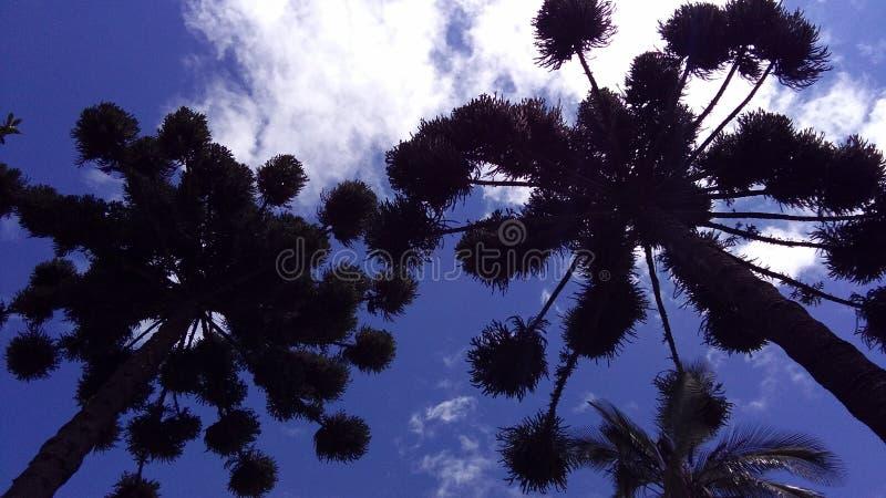 Дерево ` s матери жизни стоковые фото